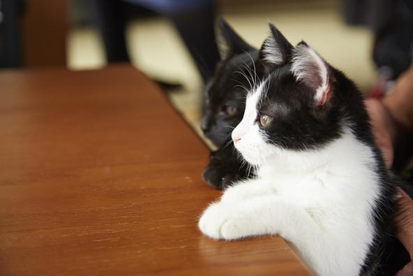 撮影初日から、風間とチン&クロがアパートの中で<共演> (C)2015杉作・実業之日本社/「猫なんかよんでもこない。」製作委員会
