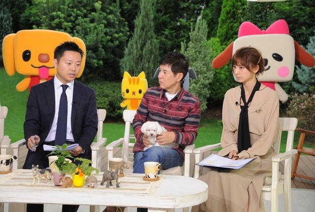 『ペットの王国 ワンだランド』左から:ゲスト太田匡彦、関根勤、篠田麻里子 (c)ABC