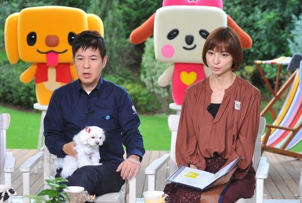 『ペットの王国 ワンだランド』写真左から:関根勤、篠田麻里子 (c)ABC