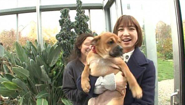 『ペットの王国 ワンだランド』コンチネンタルブルドッグ、篠田麻里子 (c)ABC