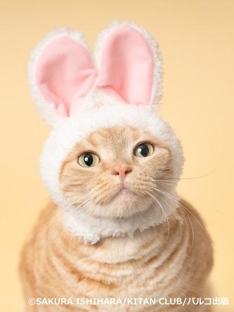 「必死すぎるネコ」から「かぶりものねこ」まで、キュートな猫の写真&グッズを集めた『ねこがかわいいだけ展』を横浜駅直通アソビルで9/14(土)~10/14(月・祝)の期間限定で開催