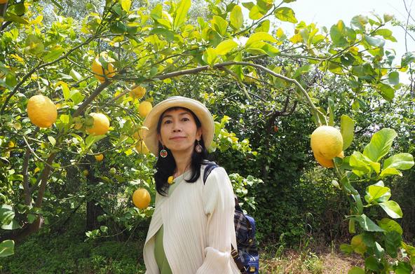 『世界ふしぎ発見!』シチリア島では柑橘類の栽培が盛んに行われている。〈ミステリーハンター〉竹内海南江 (c)TBS