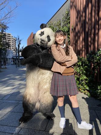 朝番組『 ZIP! 』にパンダがレギュラー出演!?パンダが英語を伝授する新コーナー!2月よりスタート!