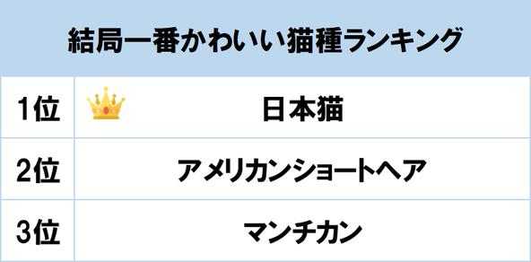 1位は「日本猫」! gooランキングが「結局一番かわいい猫種ランキング」を発表 (1)