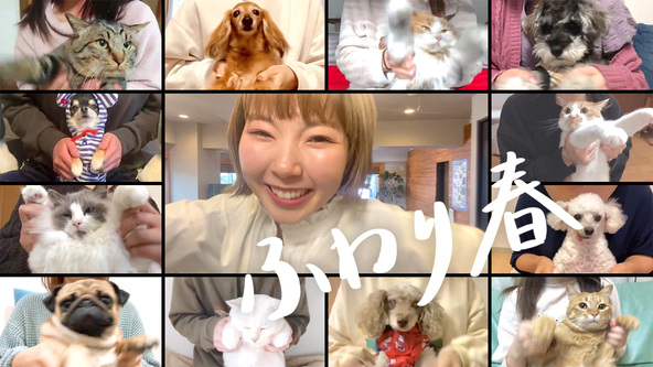 すべてリモートで制作したあさぎーにょのMV「ふわり春」が公開!ファンの自宅で撮影した動画もMVの一部に (1)
