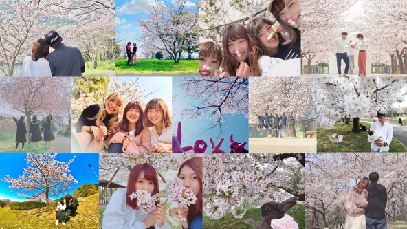 人気シンガーソングライターMACOがSNSで繋げるファンとの絆!ファンから集めた桜の写真で制作された最新シングル「桜の木の下」のスペシャルファンムービーが完成!! (1)