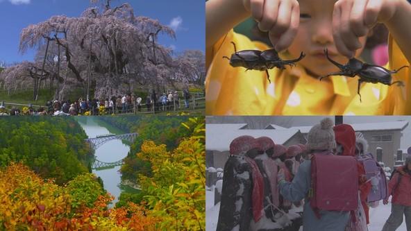 NHK福島放送局制作「『星影のエール』~福島colors ver.~」