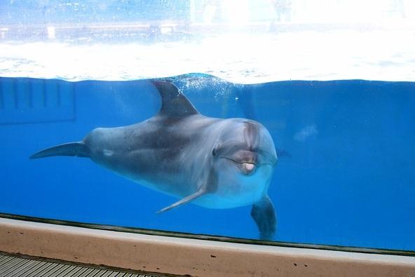 イルカとの撮影