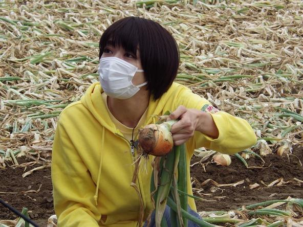 『あぐり王国北海道NEXT』収穫期をむかえたタマネギ (c)HBC