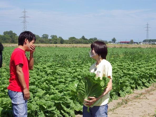 『あぐり王国北海道NEXT』森アナも無事!?ハクサイを収穫できました (c)HBC