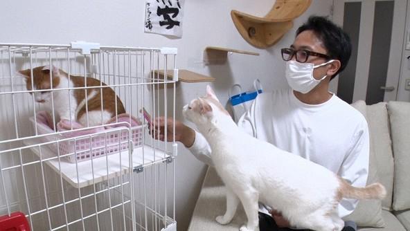 『I LOVE みんなのどうぶつ園』サンシャイン池崎が保護ネコを預かりお世話する企画(3) (c)NTV