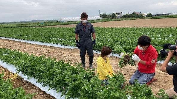 『あぐり王国北海道NEXT』セロリ畑でハプニング!? (c)HBC